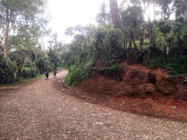 Na cestě mezi kávovými farmami